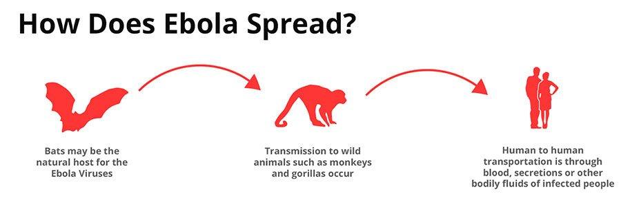 How-Does-Ebola-Virus-Spread-transmit-image